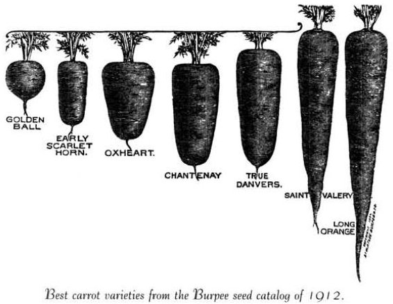 wortels in Burpee Seed Catalog 1912, bron: Carrotmuseum.uk