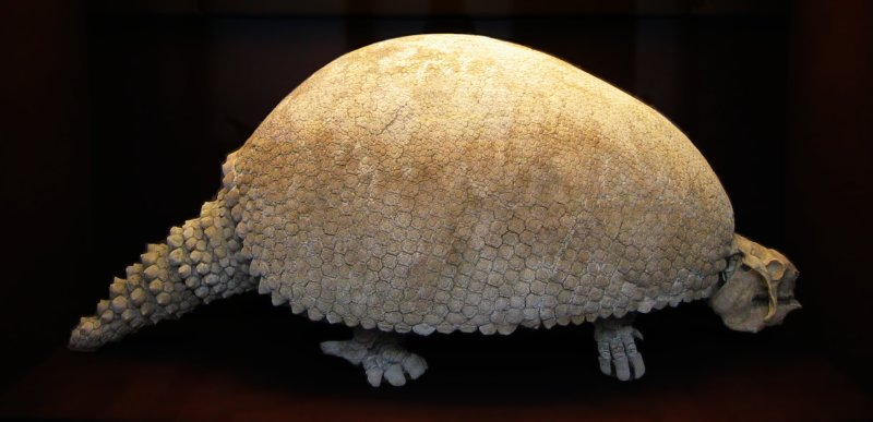 reuzengordeldier, Glyptodon
