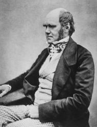 Charles Darwin, 45 jaar oud, bron Wikipedia