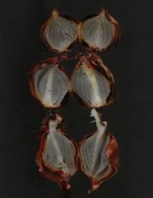 Gepofte uien, beeld: Merel Kamp
