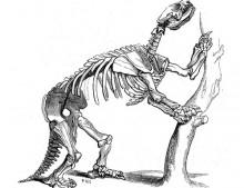Mylodon Darwinii - Norbert Peeters